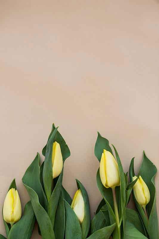 Chiara Bassi, Fotografa freelance a Udine - Progetto personale, Tavole botaniche